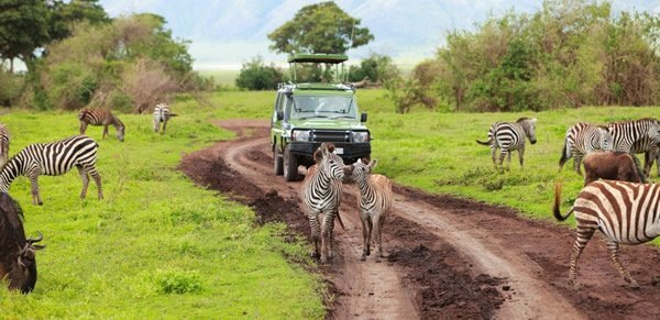 Tanzania Self drive Safari