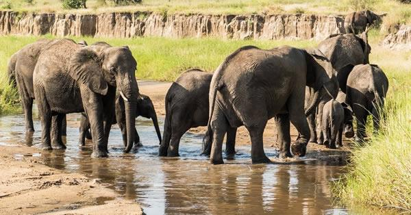 2 Days Budget Safari Tarangire and Ngorongoro Crater