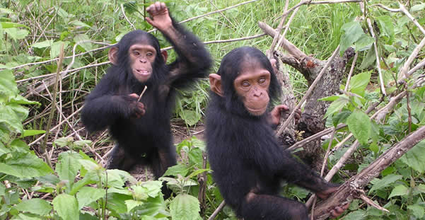 3 Days Gombe Chimpanzee Tracking Tour