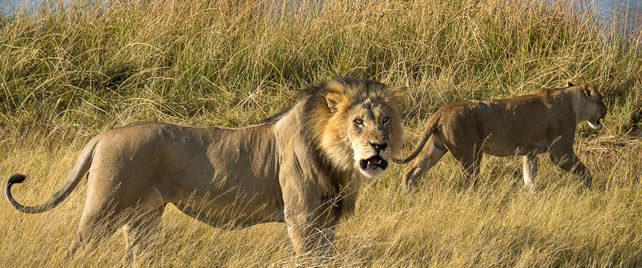 Katavi Safari Tour Tanzania – 4 days