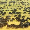 African Safari Serengeti