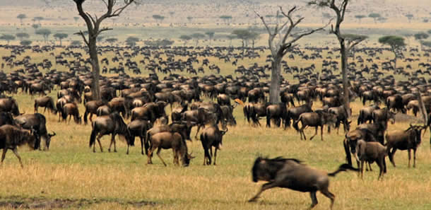 5 Days Serengeti Wildebeest Migration Safari